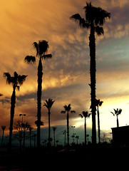(OrangeCounty_Girl) Tags: california storm wet beautiful rain cali clouds amazing scenic silhouettes palmtrees raindrops orangecounty bp oc raining buenapark stormclouds dropsofwater wetness hnc orangeclouds orangecountygirl hollyclark 79714 hollyclark714 hnc714 holly714