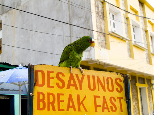 Parrot on Breakfast Sign in Flores Guatemala