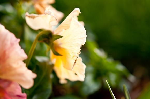 2010-02-18 Garden_7