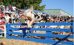Portland Multnomah County Fair Pig Race