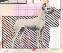 dogged (kurberry) Tags: collage cutandpaste analoguecollage vintageephemera tracingpaper dog greatdane
