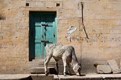 2013 02 03 Indien 0427.jpg (kurt.maier1) Tags: 2013 tiere urlaub jaisalmer rajasthan indien in