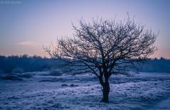 Winter tree (Wim Scholte) Tags: d7100 fryslân katlijkerschar netherlands nikon wimscholte winter