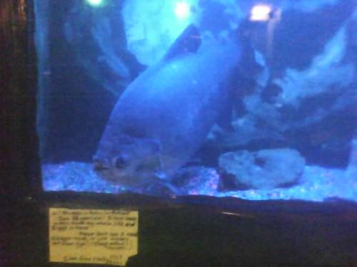 passiveaggressivenotes.com: help, my fish has stockholm syndrome!