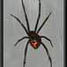 3720849354 84eb788432 s Monsoon Brings Phoenix Creepy Crawlers