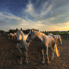 Camargue - waiting for a ride - Explore (rinogas) Tags: horse france sunrise nikon nuvole alba d200 francia camargue mattino nikkor1224dx rinogas