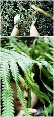Garden (ClickFlashPhotos / Nicki Varkevisser) Tags: summer portrait plants selfportrait green me girl face self garden outside person teen ferns hiding nickivarkevisser thegoldismynecklaceoutoffocusitwasahappyaccident