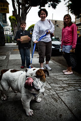 Dog (nubui) Tags: sanfrancisco street family dog tongue district bulldog safari mission portfolio showcase tfttf tfp tipsfromthetopfloor chrismarquardt topfloorproductions