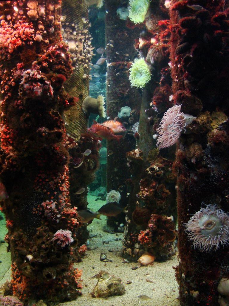 DSC01911 Monterey Bay Aquarium