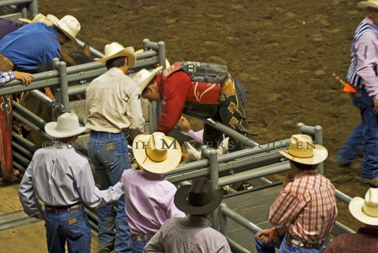 rodeo cowboys prepare a bronc