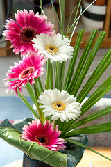 Gerbera's (Marianne de Wit) Tags: flowers fleurs fiori bloemen gerberas