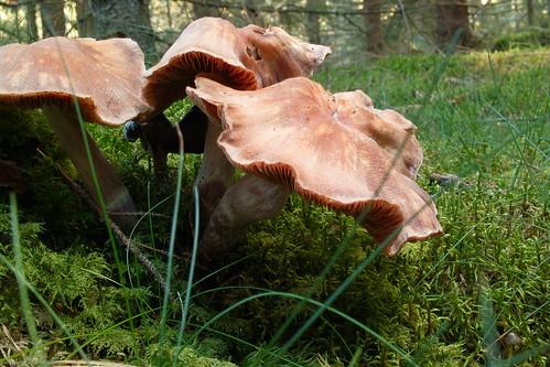 Mushrooms at 10s / f14