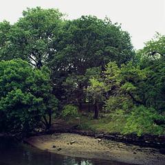 (Alex Gaidouk) Tags: trees mystery
