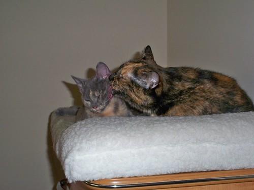 2009-09-19-Beulah02