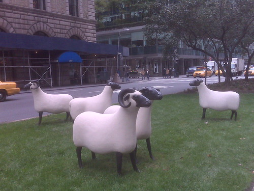 Park Avenue Sheep!!