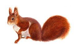 squirrel finished (Sigrid Frensen) Tags: painting most posted flckr2