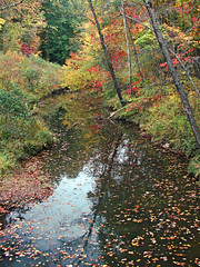 fallen leaves (bdaryle) Tags: autumn trees nature water leaves reflections stream fallcolor sony northcarolina umsteadstatepark natureselegantshots panoramafotogrfico brandondaryle bdaryle imagesbybrandon