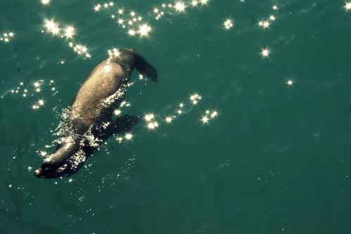 sparkle seal