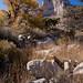 Guadalupe Canyon, El Capitan Trail