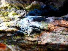 Rainbow Rock (Kara Allyson) Tags: cliff colors rock stone wisconsin rainbow natural limestone rainbowrock
