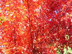 Fall Colors Boulder   DSCN0272