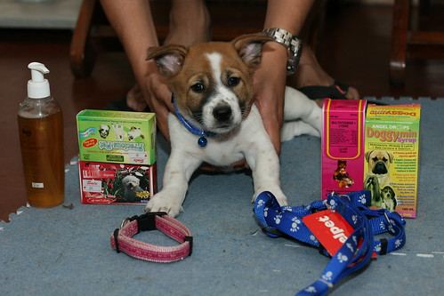 Doggie with his loots