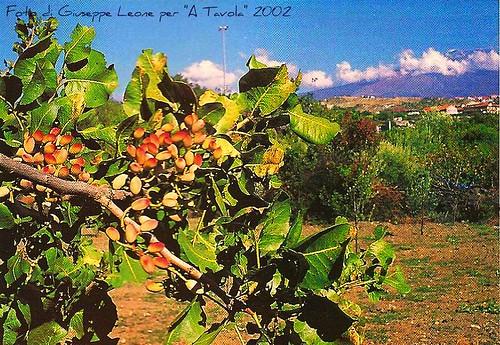 pistacchi foto di Giuseppe Leone per A Tavola [2]