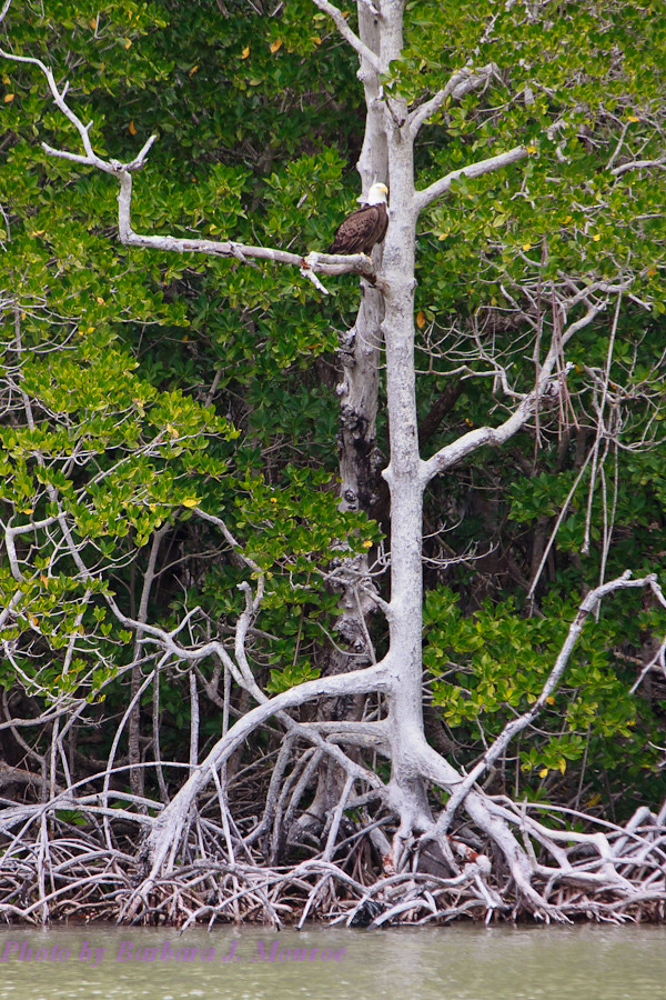 Everglades National Park-10,000 Islands (8 of 16)