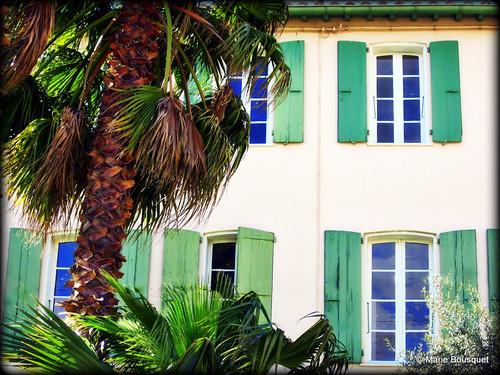 Façade aux volets verts et au palmier