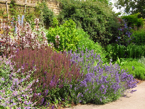 Lavender and Sage in the Duke's Garden at Kew