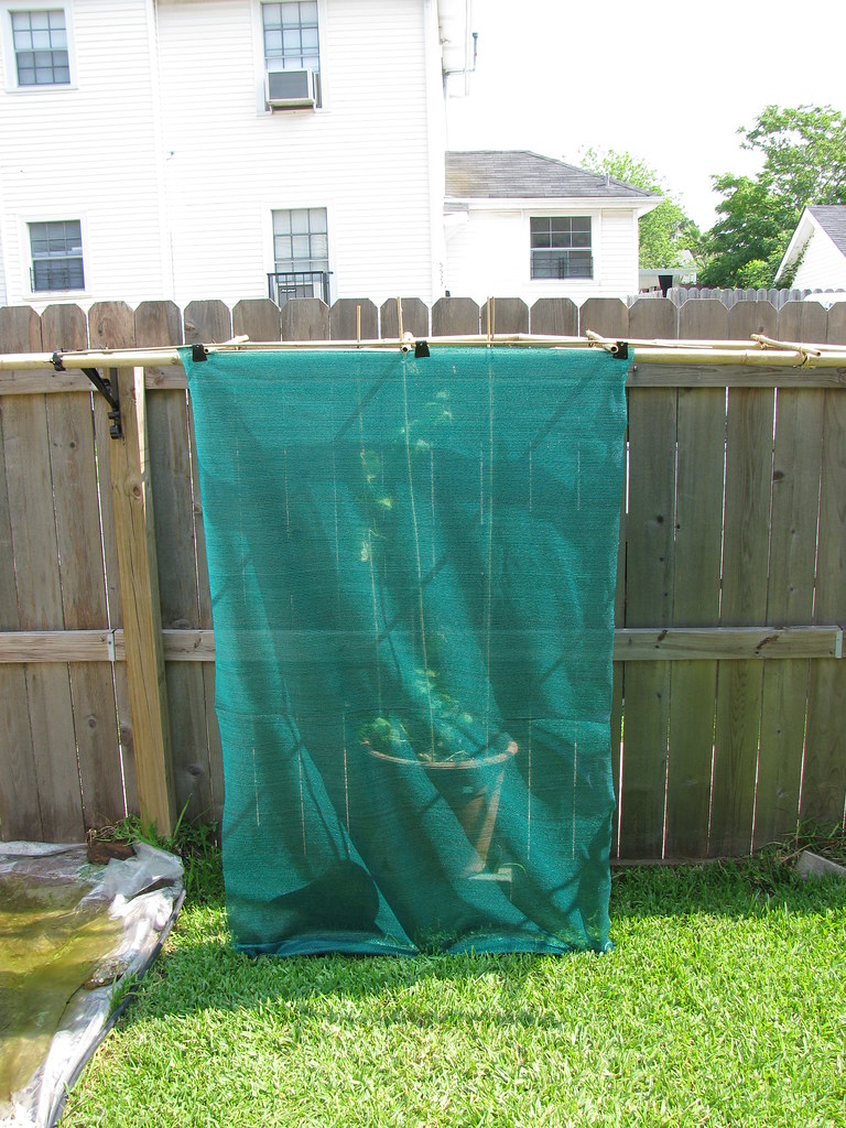shade cloth on trellis