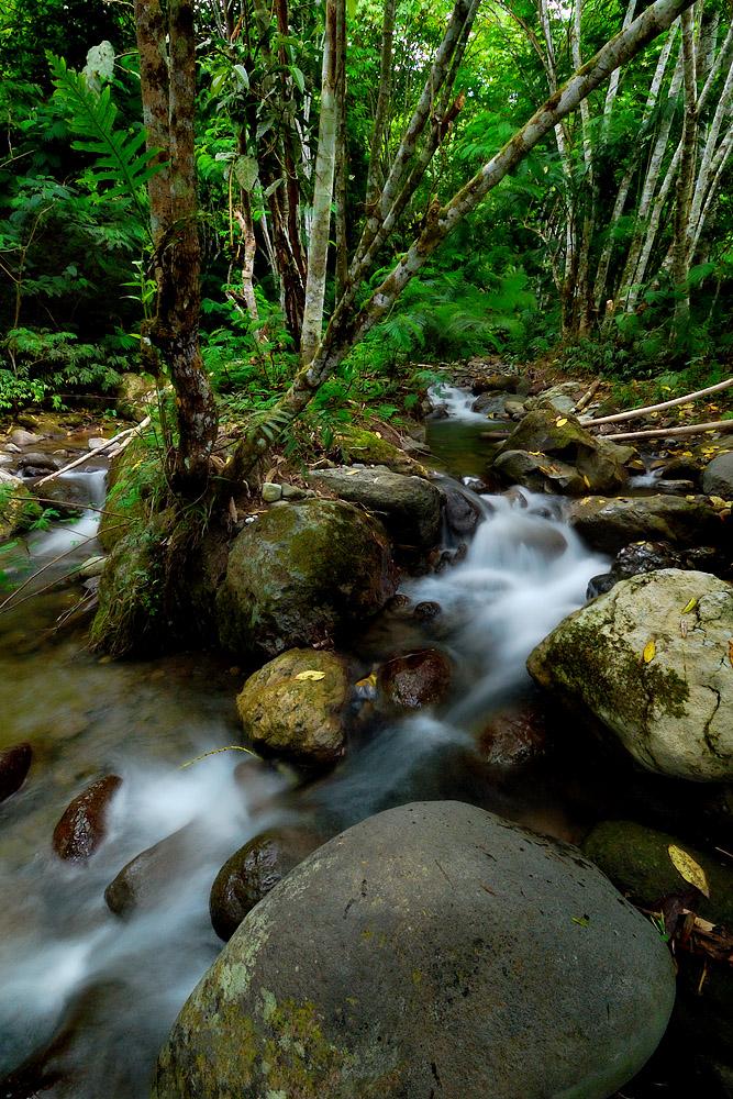 Sepaka Stream