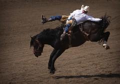 Bucking Bronco (Duncan Kinney) Tags: calgary delete10 delete9 delete5 delete2 cowboy delete6 delete7 save3 delete8 delete3 delete delete4 save save2 save4 rodeo save5 save6 stampede calgarystampede rodeofinals