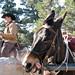 Logan's mule