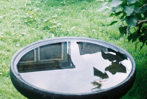 Reflected in Bird Bath