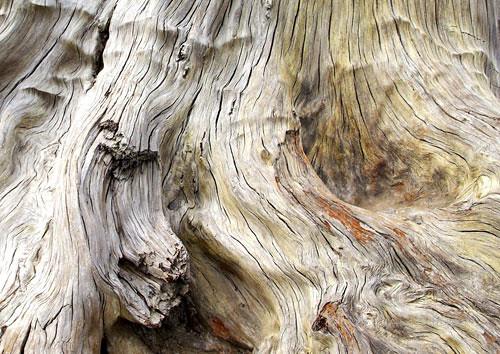 Ancient Kauri Wood