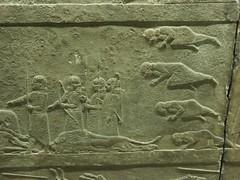 BM_ANE485 (sipazigaltumu) Tags: london museum ancient near antique east bm british mesopotamia basrelief reliefs assyrian antiquit ashurnasirpal antiquite ashurbanipal assurbanipal orthostat assurnasirpal orthostate tiglathpilesar tiglatpilesar tiglatpileser