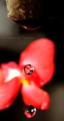 Stop the time (Corazn.de.Sanda) Tags: flowers libertad drops agua time flor gotas stop reflexions sueo tiempo caida detenido a3b