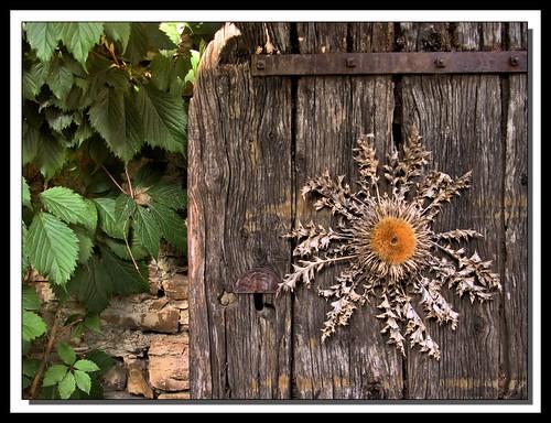Chardon en Occitanie, La Couvertoirade