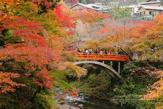 日本.京都.有紅葉山谷,就有紅葉河谷