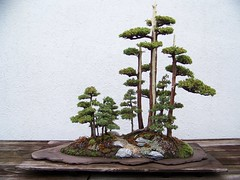 NATIONAL BONSAI & PENJING COLLECTION AT THE US NATIONAL ARBORETUM (spike55151) Tags: china trees tree japan japanese us chinese arboretum collection national bonsai bonsaitree bonsaitrees nationalarboretum bonsais usnationalarboretum penjing arboretums