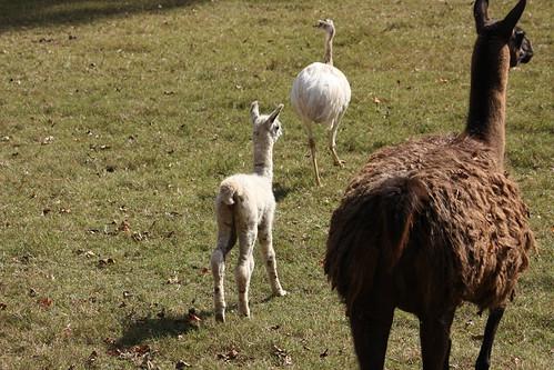 Mama + Llama