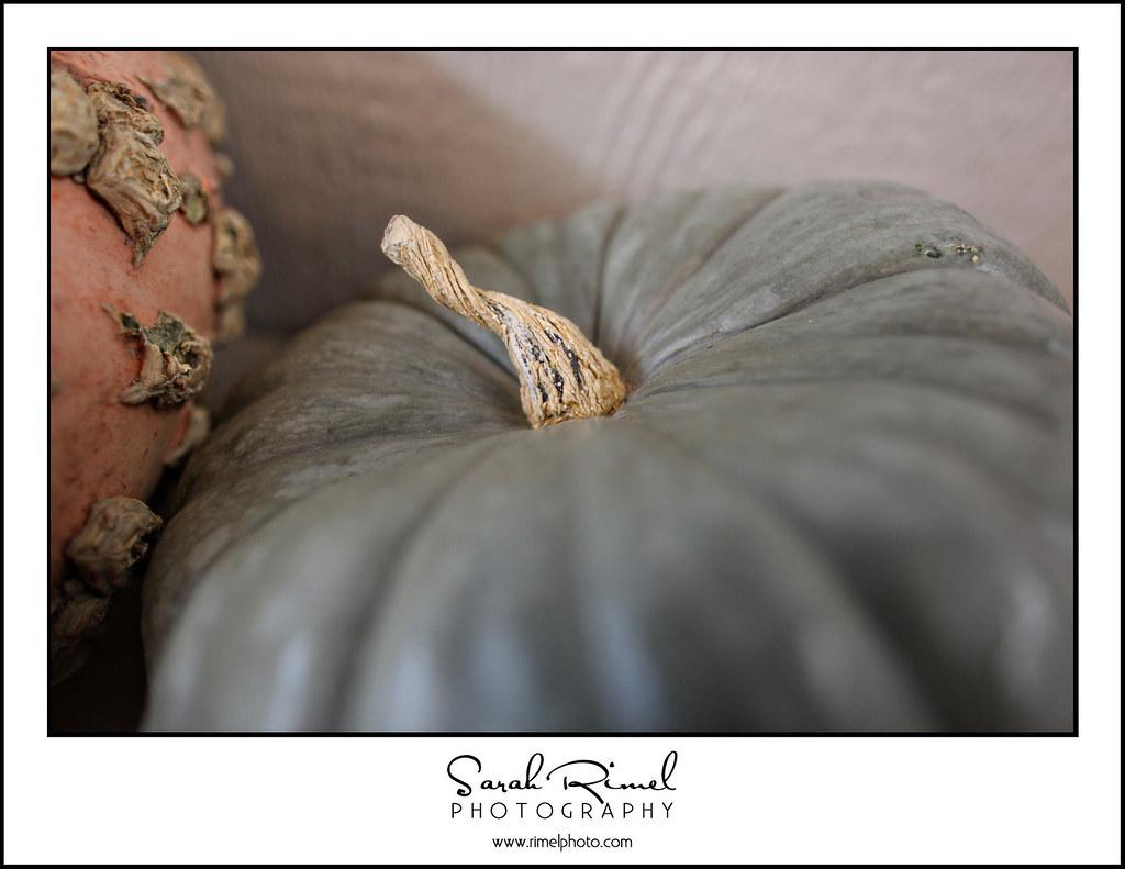 pumpkins 32