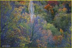 Falls (chichetto) Tags: autumn art landscapes nikon italia falls van 1001nights camper 2009 lemarche panorami d80 anawesomeshot vftw worldsbestnikonshot sharingart nikonflickraward chichetto travelsofhomerodyssey worldofnaturethebest