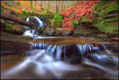 Allt a Mhadaidh (angus clyne) Tags: autumn fern tree fall forest scotland waterfall moss stream perthshire falls tay burn ash lichen dunkeld mossy beech birnam a9 flikcr dalguise ballinluig leefilters colorphotoaward 5dmarkii alltamhadaidh