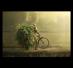 (.Lal Khan.) Tags: life light mist grass canon village sunday oldman cycle 5d mm khan magical 70200 lahore lal kasur