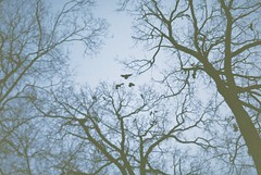 (MilkyAir) Tags: trees cold film birds analog iso100 polska nysa prakticamtl3 milkyair