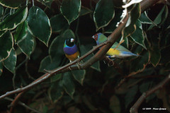 Duas Aves / Two Birds (Nuno-Gomes) Tags: life wild bird nature animal zoo interesting fantastic bestof shot great best explore ave greatshot maia colored ohhh nunogomes excelent mygearandme mygearandmepremium mygearandmebronze mygearandmesilver mygearandmebronzeselection mygearandmegold mygearandmeplatinum mygearandmediamond ngomes