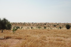 1b.Typical countryside, sand dunes, south eastern Mauritania
