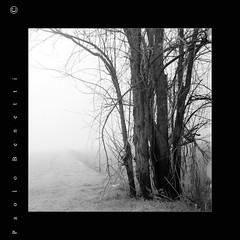 il senso delle cose (paolo.benetti) Tags: bw 6x6 italia kodak campagna ferrara nikkor nebbia 105mm pellicola cona riproduzione 100tmax abigfave zenzabronicas2
